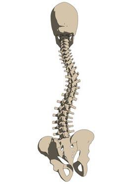 Deformitäten Der Wirbelsäule Skoliose Und Operative Verfahren